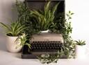schreibmaschine im grünen